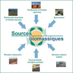 sources de biomasse