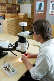 Greg Pohl, chercheur du CFN, examine des arthropodes au microscope.(Photo : Greg Pohl)